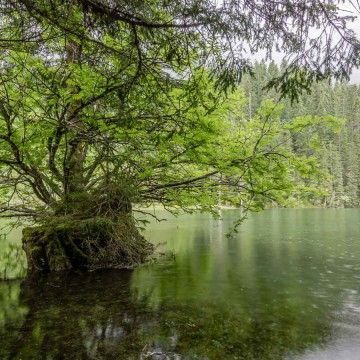 Lake Mittersee in sprin